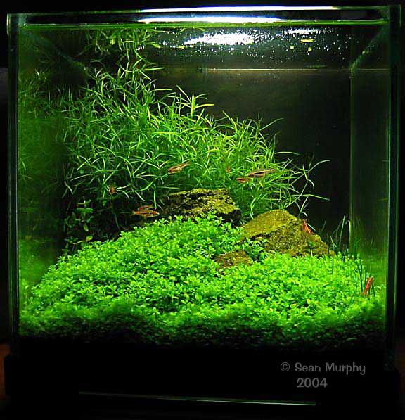 Aquascape Adalah : Aquascape adalah suatu hobie baru dalam kalangan para penggemar ikan ...